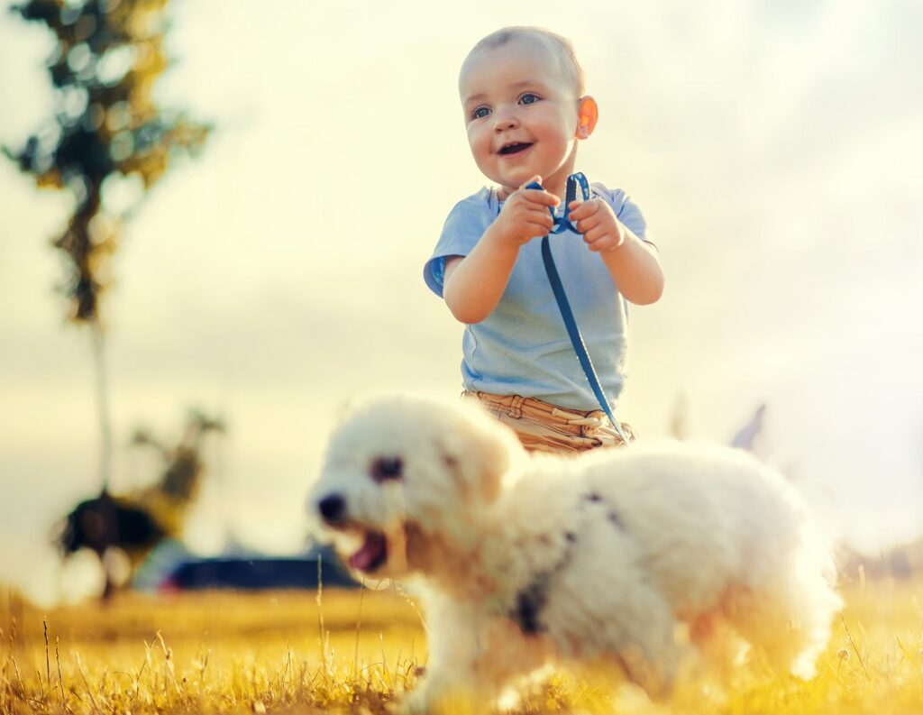 Little boy and his puppy in the park,having fun.