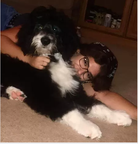 A happy client and their Bernedoodle from Oodles of Doodles Pennsylvania.